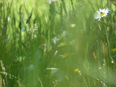 texture / background - Meadow