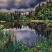 Naturweiher ++ Natural pond Dietramszell