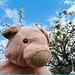 The 50 Images-Project: Doudou pose devant le poirier