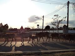 Défié surprise à saveur thaï / Surprising  parade in the middle of nowhere