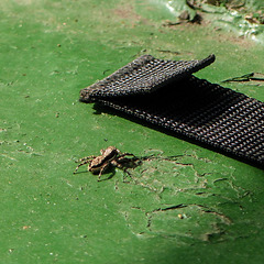 Spider on bottom of our boat, Caroni Swamp, Trinidad