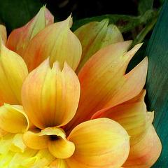 Rien que des pétales / Only petals