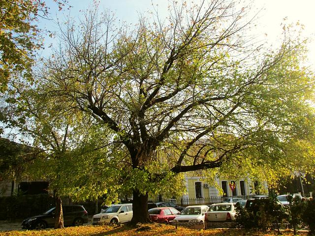 old tree enjoying the last sunny days...