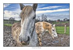 Le photographe qui soufflait dans les naseaux des chevaux