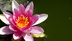My litlle pond...