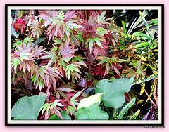 Leaf Medley.