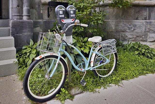 Meter Expired – de Maisonneuve Boulevard near Elm Avenue, Westmount, Québec