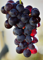 Its that time oF year again : Wine making