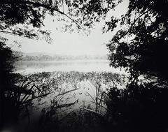 Spring Lake WPPD