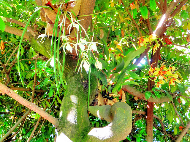 Orchids on the trees. ©UdoSm