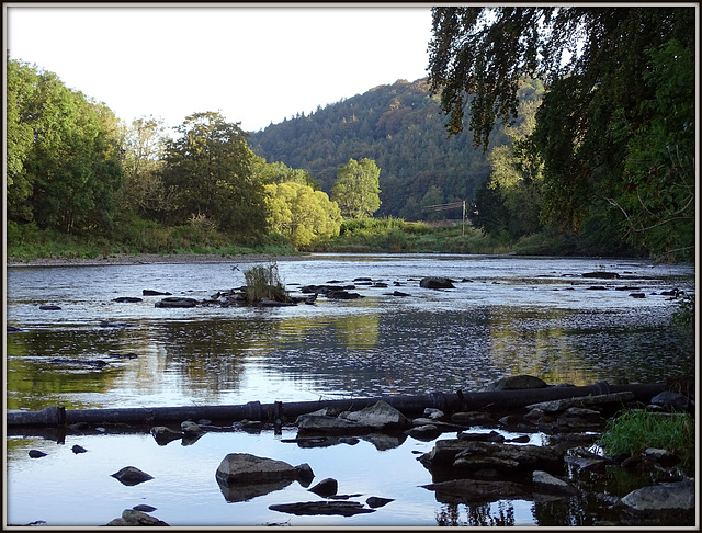 The River  Tweed at Dryburgh