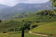 Weinwanderweg von Kurtatsch nach Entiklar (PIP)