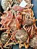 Crabs on Leiden Saturday market