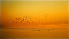 Der Vögel froher Frühchoral begrüßt des Lichtes Spur