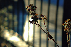 In The Low Winter Sun