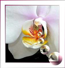 The heart of an orchid... ©UdoSm