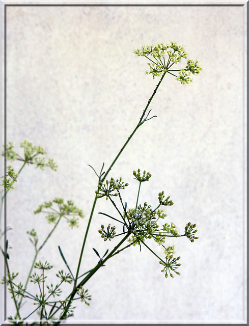 parsley's embroidery