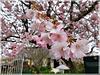 Le printemps est là.........