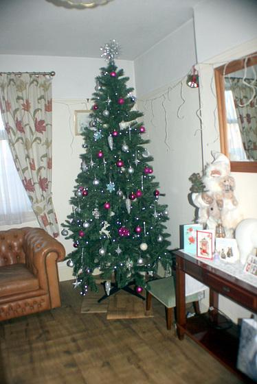 IMG 0318  Our Xmas  Tree