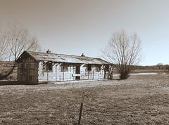 Sepia farm