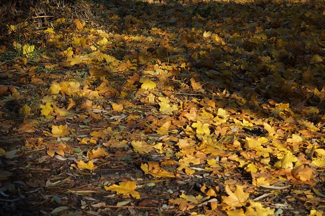 Herbst mit Sonne ...