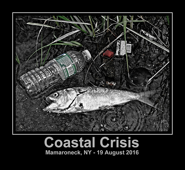 Coastal Crisis