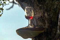Glas am Baum