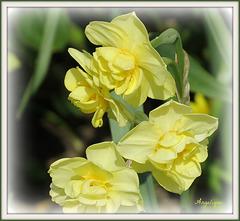 Un peu de printemps en ce Vendredi ! bonne journée à tous et bon WE