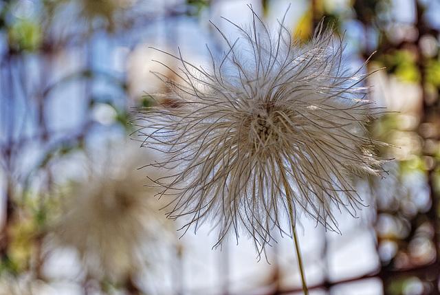 Delicate Seeder