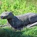 IMG 3680 Otter dpp