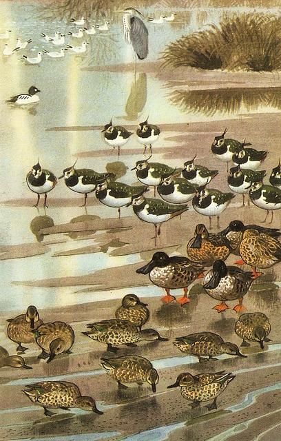 Lakeside birds.