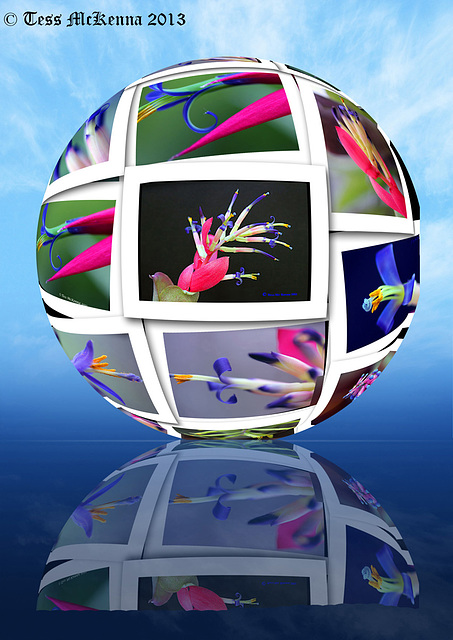 Bromeliad Sphere 3  copy