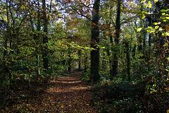 Sentier cette bonne odeur d'automne