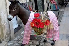 L'Ane du Poitou-Charentes
