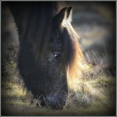 The Horses Head