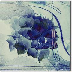 ...blaue Hortensie...