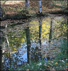 Lusigny reflets
