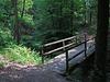 Im Wald bei Kettwig