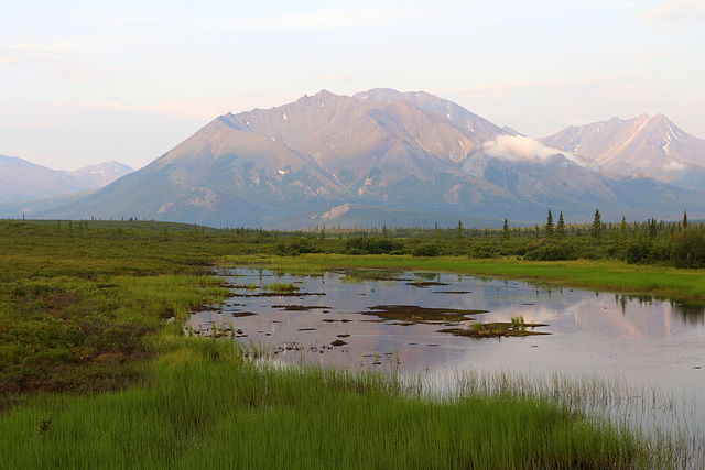 Morning along the Denali Highway