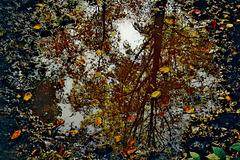 Ein wunderschöner Herbst vergeht - A beautiful autumn is going by