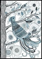 Oiseau de paradis encre