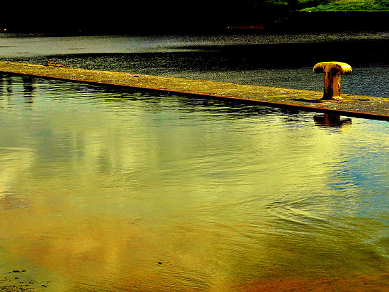 """""""On Golden Pond""""......by the edge of the Tyne"""