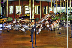 Praying Mantis – Bug Carousel, Bronx Zoo, New York City, New York