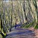 Lovely Forest (d)
