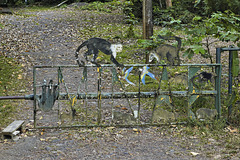 The Wildlife Gate – Seen from Highway 34, near Jaco, Puntarenas Province, Costa Rica