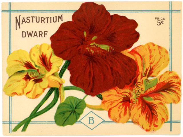 Dwarf Nasturtium Seed Packet