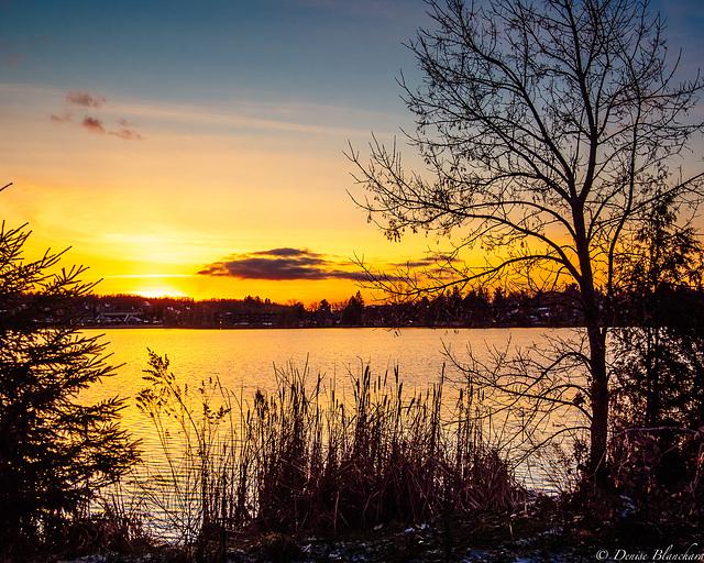2020novembre24Bord du lac