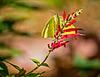 A035865dM Butterfly