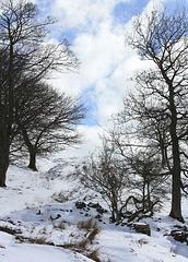 IMG 7677 winter