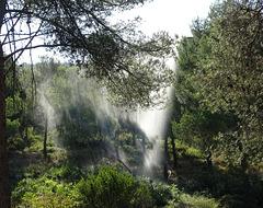 ...Le matin,les jours de grand vent,un système d'arrosage est mis en place pour arroser le s Arbres du Parc des Calanques...